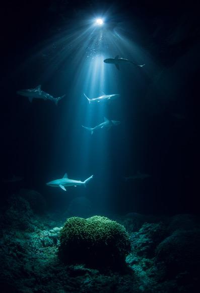 03-bassas-lagoon-galapagos-sharks-580v