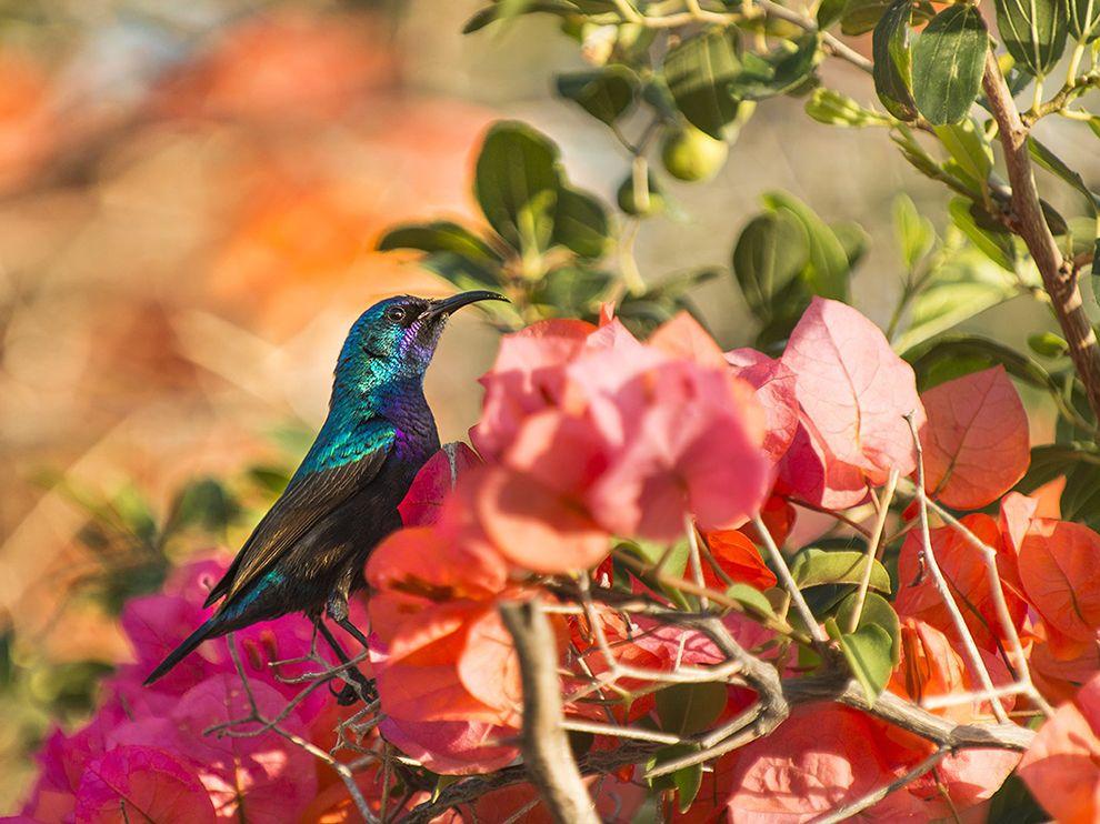 palestine-sunbird-galilee-israel_81120_990x742