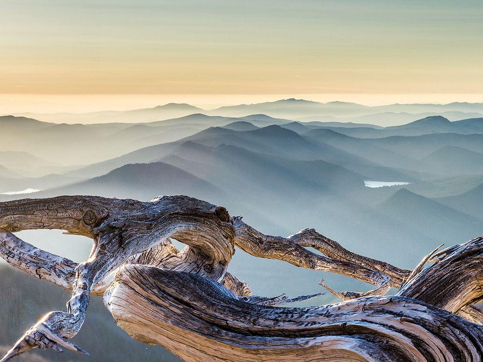 whitebark-pine-mount-hood_82994_990x742
