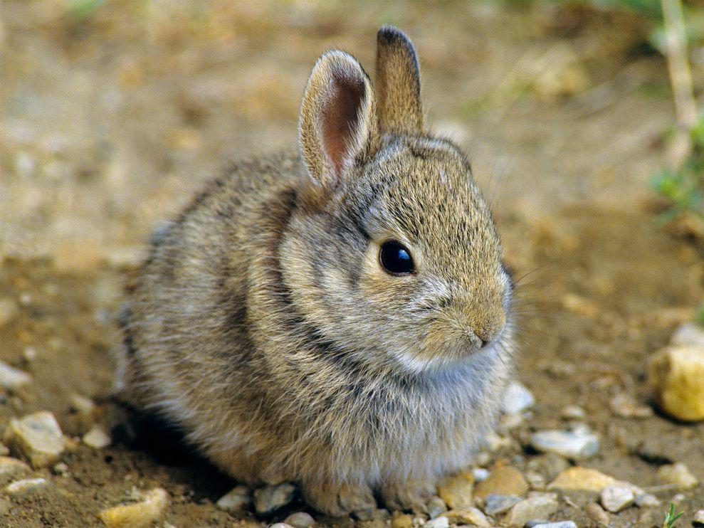 1222 rabbits&hares-1