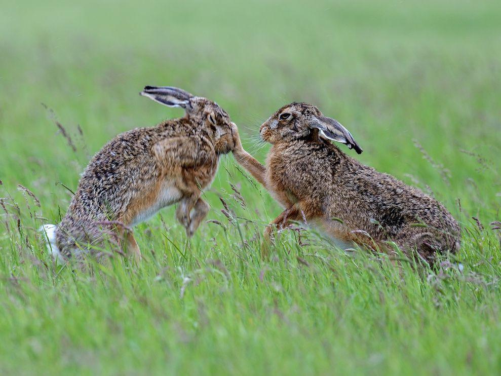 1222 rabbits&hares-3