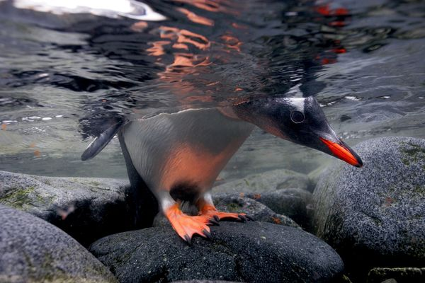 Photograph by Paul Nicklen, National Geographic