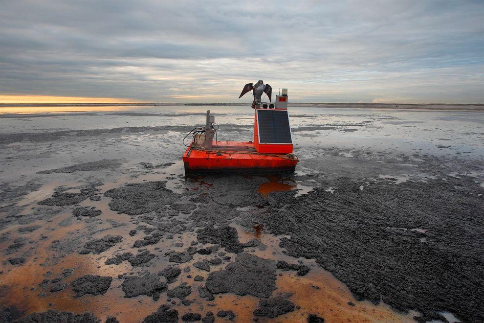 我們對能源日益增加的需求會損害土地和水道。在加拿大的亞伯達,有一隻假隼拍動翅膀防止水禽靠近,水禽如果降落在這個油砂殘渣池塘,性命難保。 Photograph by Peter Essick, National Geographic