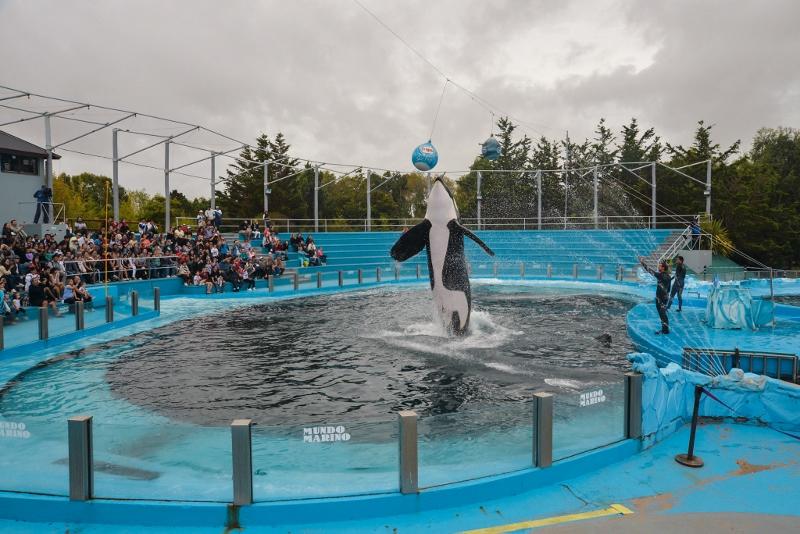 圈養在海洋公園中的鯨豚除了死亡率高以外,壽命也比野生鯨豚短得多,而且生理與心理可能都遭受了嚴重的創傷。