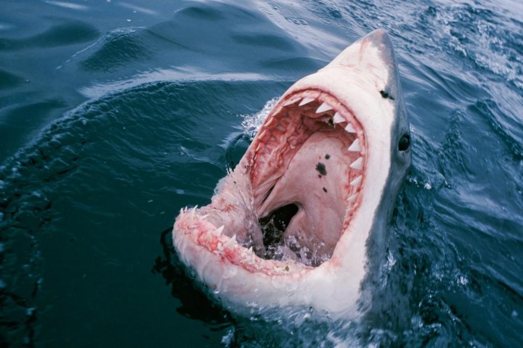 sharkattackpew.ngsversion.5cee3a5d48235d67d81d2756786eb024.adapt.1190.1