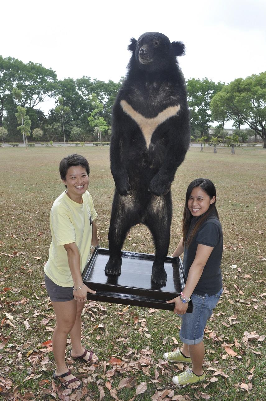 向陽大公熊已製成標本