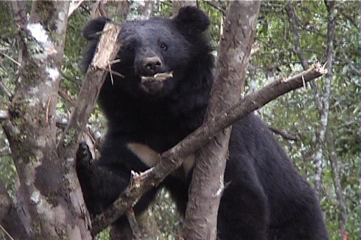 2000年-疑似向陽黑熊04