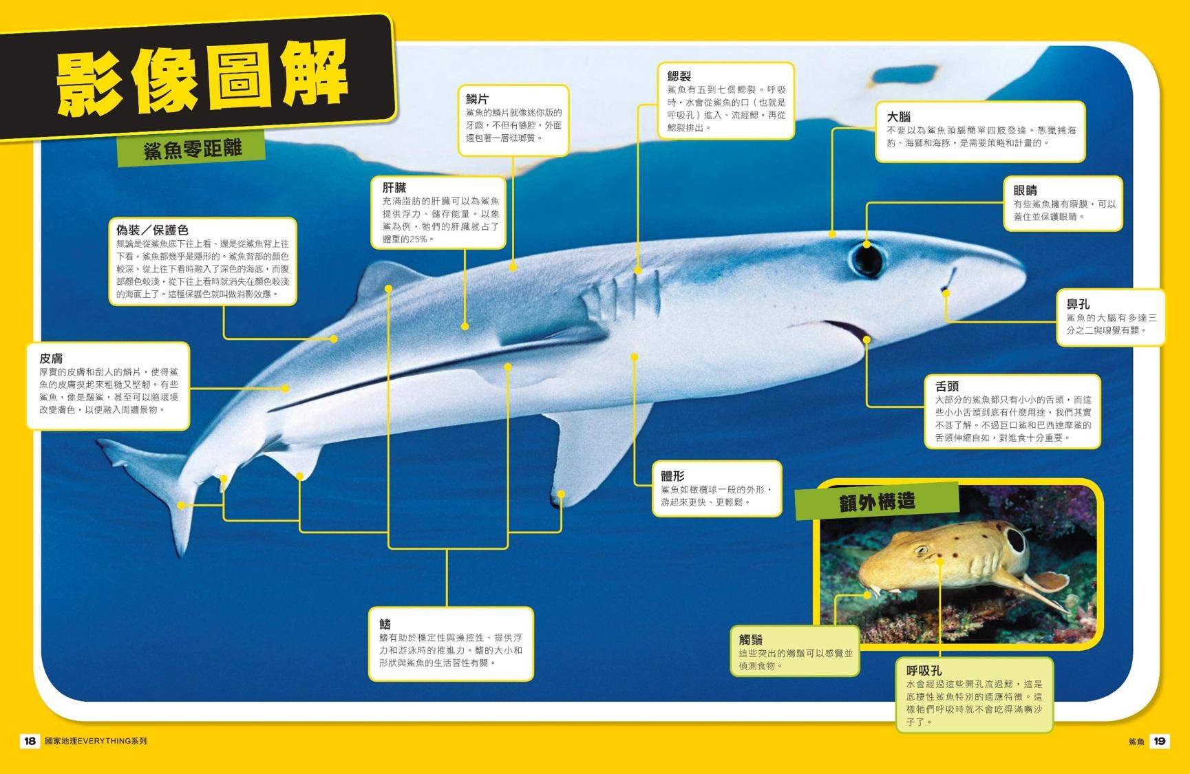 圖片出自《國家地理兒童百科 - 鯊魚》