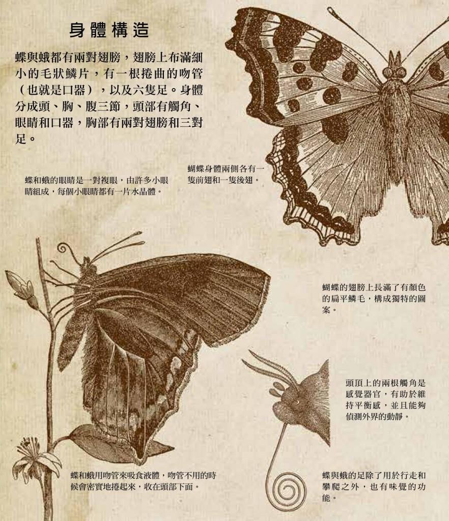 點擊圖片可放大。圖片出自《國家地理立體書 - 蝴蝶》