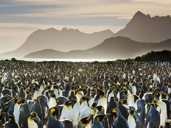 Photograph by Frans Lanting, National Geographic Creative