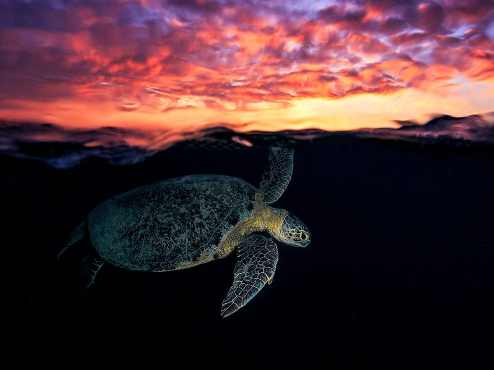 mayotte-turtle_93631_990x742