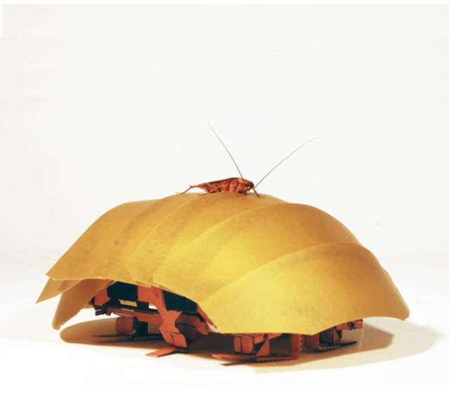 蟑螂機器人
