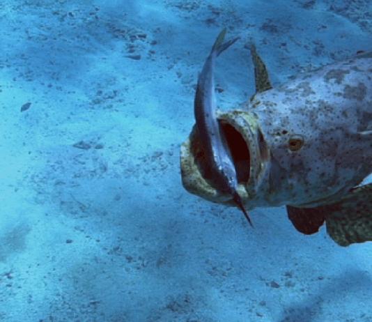 跟我們一同體驗佛羅里達豐富的海洋生態