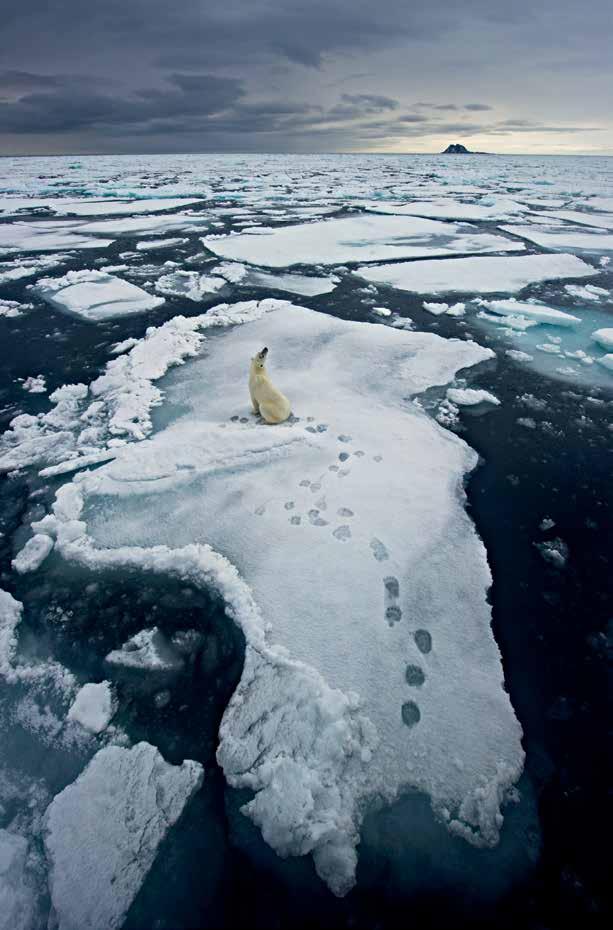 歐雷‧約爾根‧里奧頓(Ole Jørgen Liodden),攝於挪威 2012年,圖片出自《史上最偉大的自然攝影經典:年度野生動物攝影師大賽50年獲獎作品精粹》(50 Years of Wildlife Photographer of the Year: How Wildlife Photography Became Art)