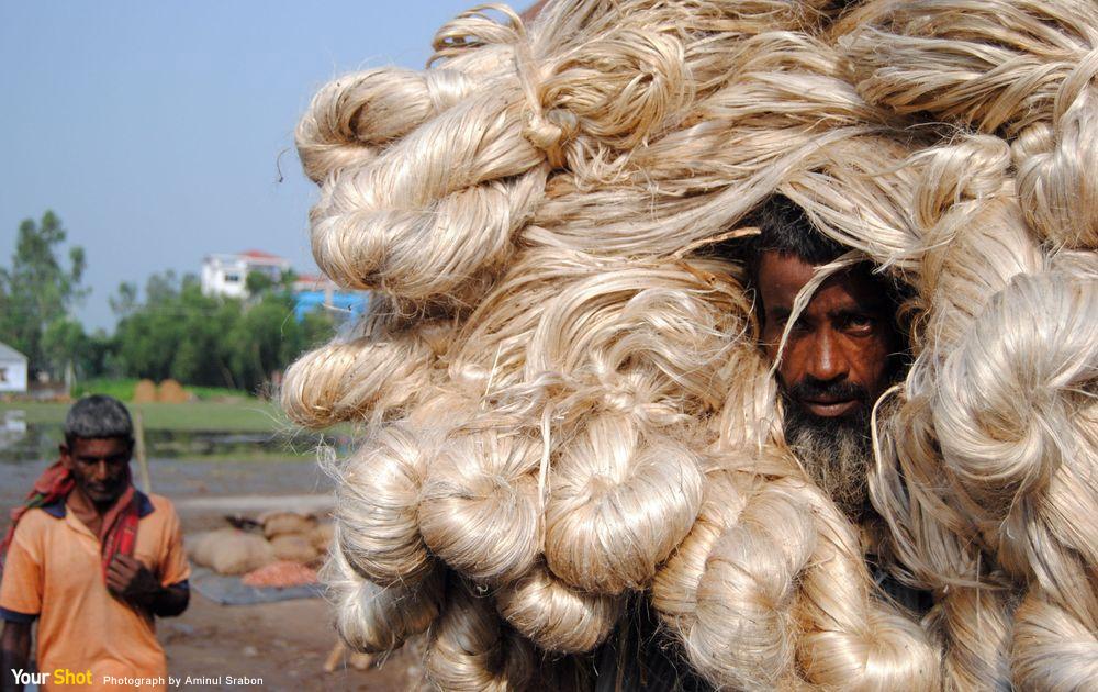 黃麻是孟加拉農民的黃金