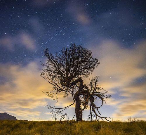 墨西哥波波卡特佩特火山與伊斯塔西瓦特爾火山間的丘陵的枯樹