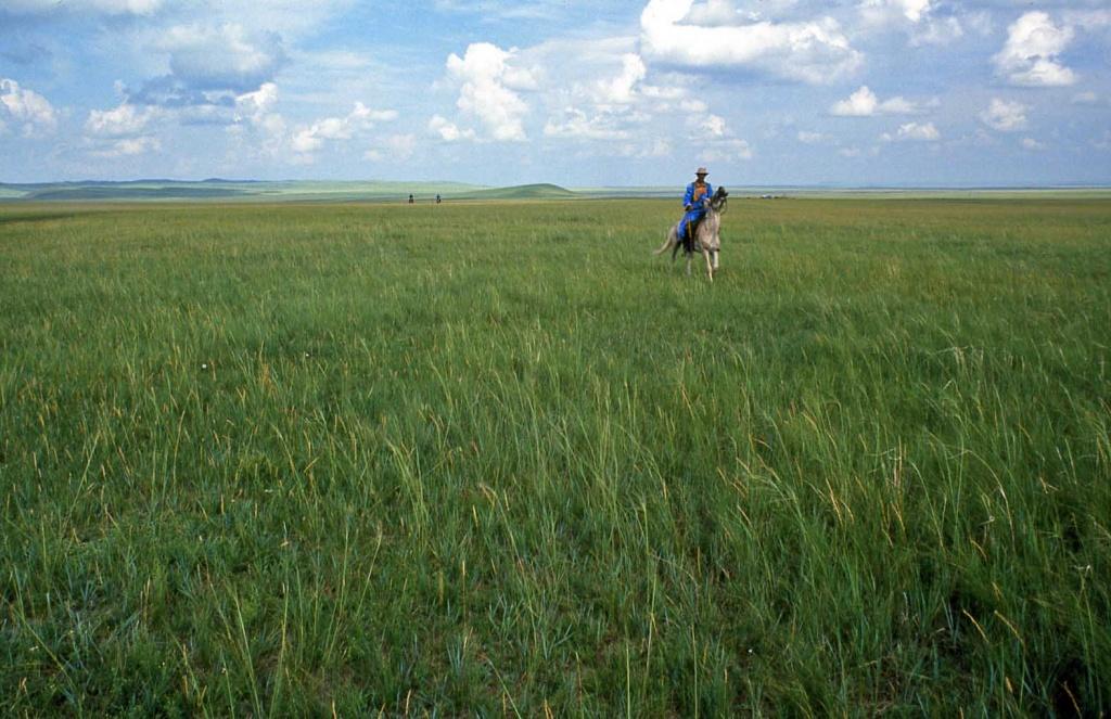 原生草原無須經營,即欣欣向榮