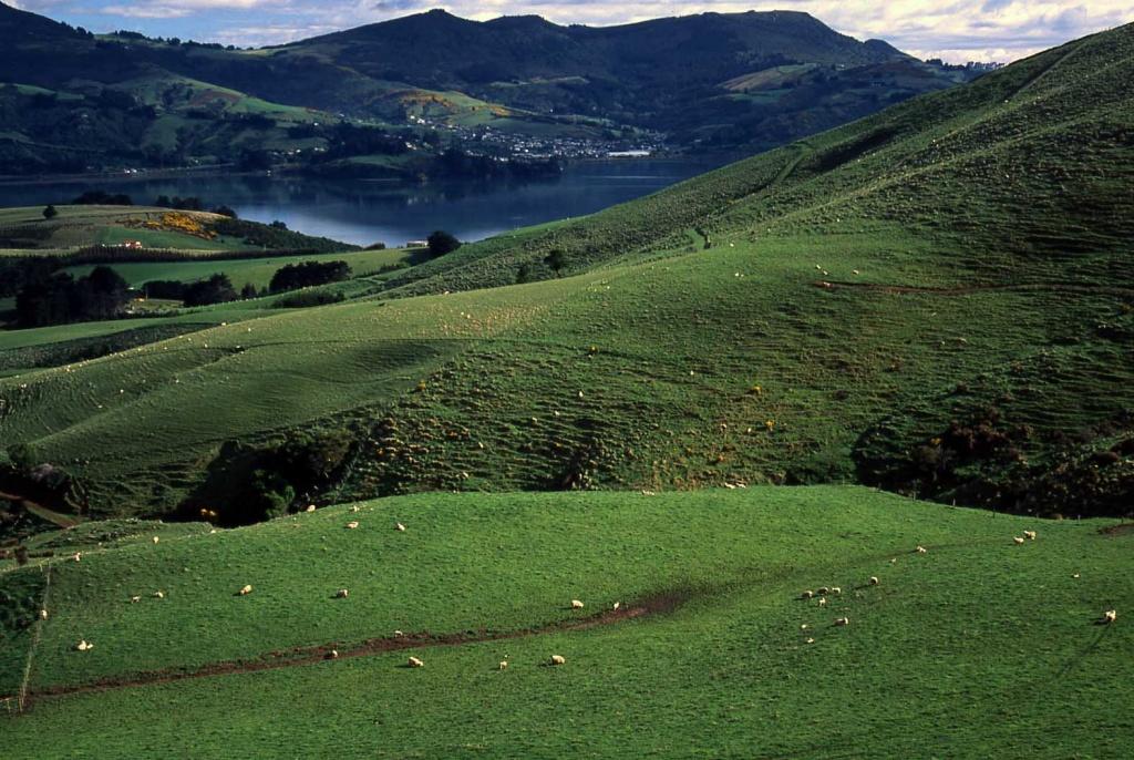 草原改種高貴的牧草,灌溉,施肥,噴藥,最後草原退化了