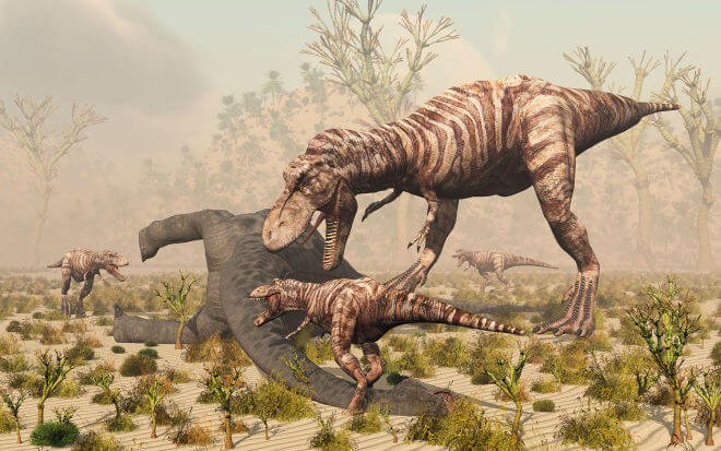 一隻成年母暴龍連同三個孩子正在撕咬另一隻恐龍。Illustration by Mark Stevenson, Stocktrek Images, Corbis
