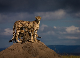 Photograph by Mohammed Yousef, National Geographic Your Shot
