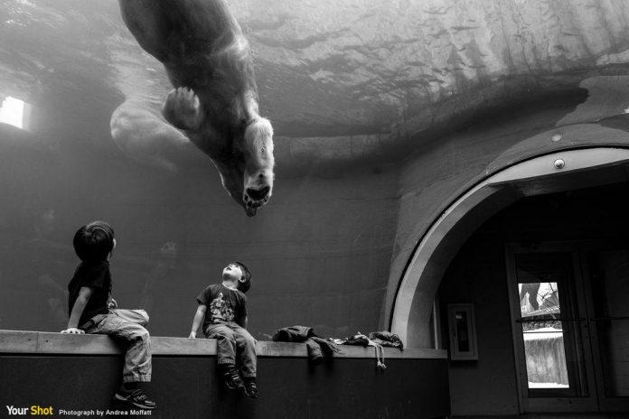 匹茲堡動物園和水族館