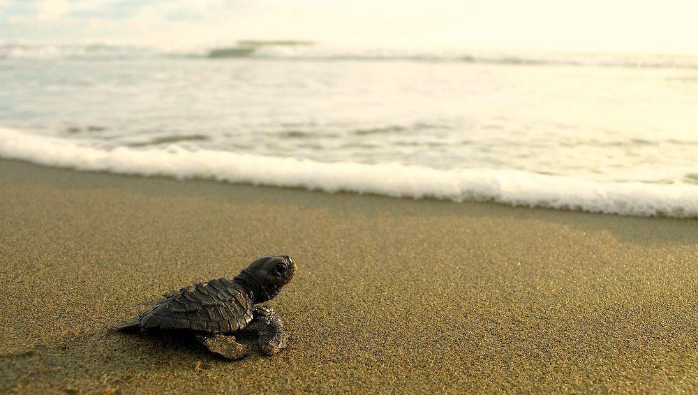 海龜岸上寶寶