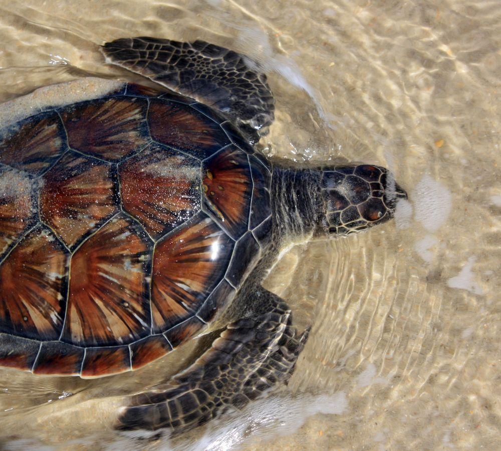 海龜與沙灘