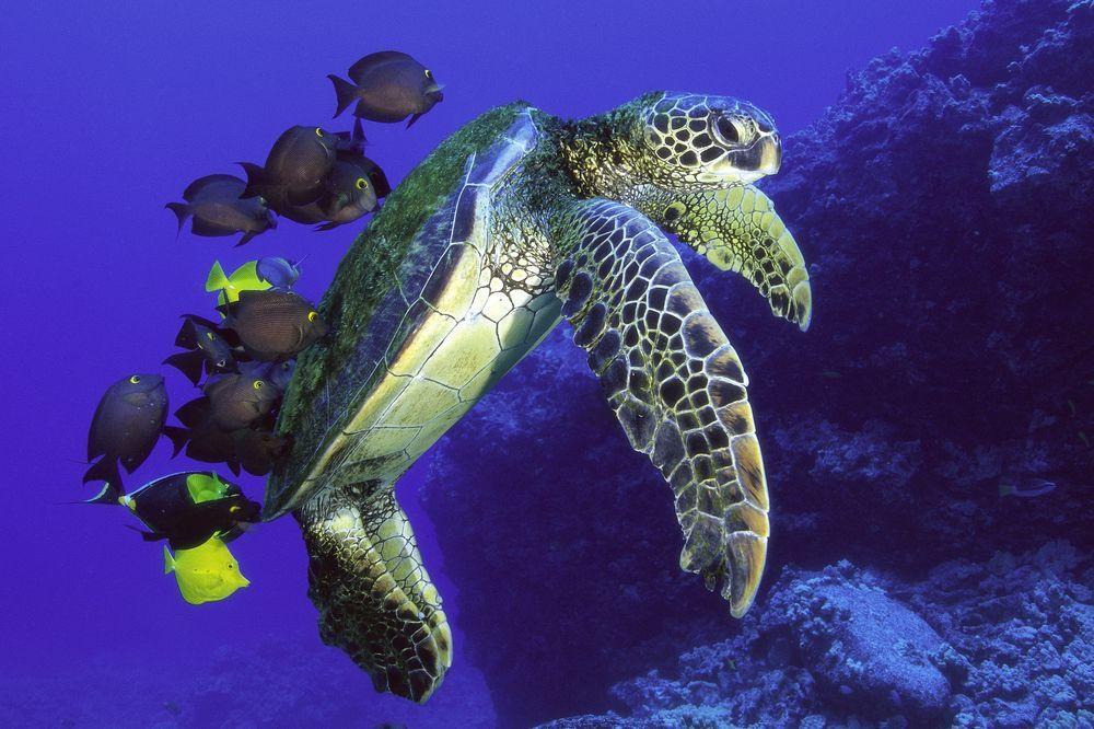海龜與海洋