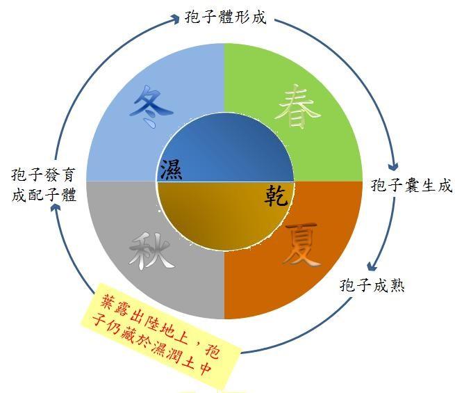 臺灣水韭生活史