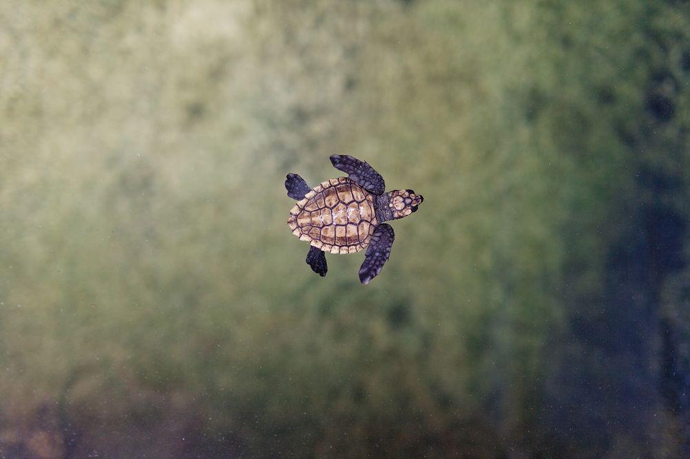 迷你海龜寶寶