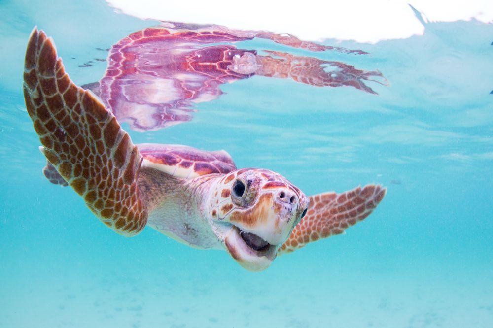 顏色特殊海龜
