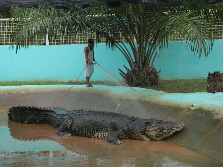 2011年9月於菲律賓捕獲的洛龍,肇因於惡劣的圈養展演場域,不到一年半就離世了。Source: Photograph by NHNZ /Kate Siney, National Geography