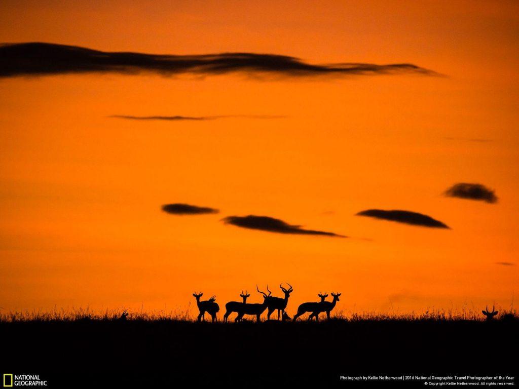 肯亞西南部的馬賽馬拉,日出映襯黑斑玲的輪廓。Photograph by Kellie Netherwood
