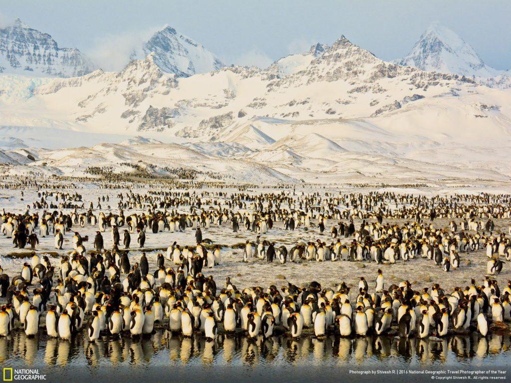南喬治亞柔和的日出、艷麗的山峰與早起的國王企鵝。拍攝時最大的挑戰,莫過於抗拒拍攝企鵝特寫的誘惑,有時得退個幾步看清企鵝背後壯麗的景觀。同場加映:拍這張照片時剛好與歐內斯特.沙克爾頓堅忍號沉入海底(1915年11月)當月相隔一百年,之後他便橫跨南喬治亞,並於1916年於斯特羅姆內斯附近尋求救援。 Photograph by Shivesh R.