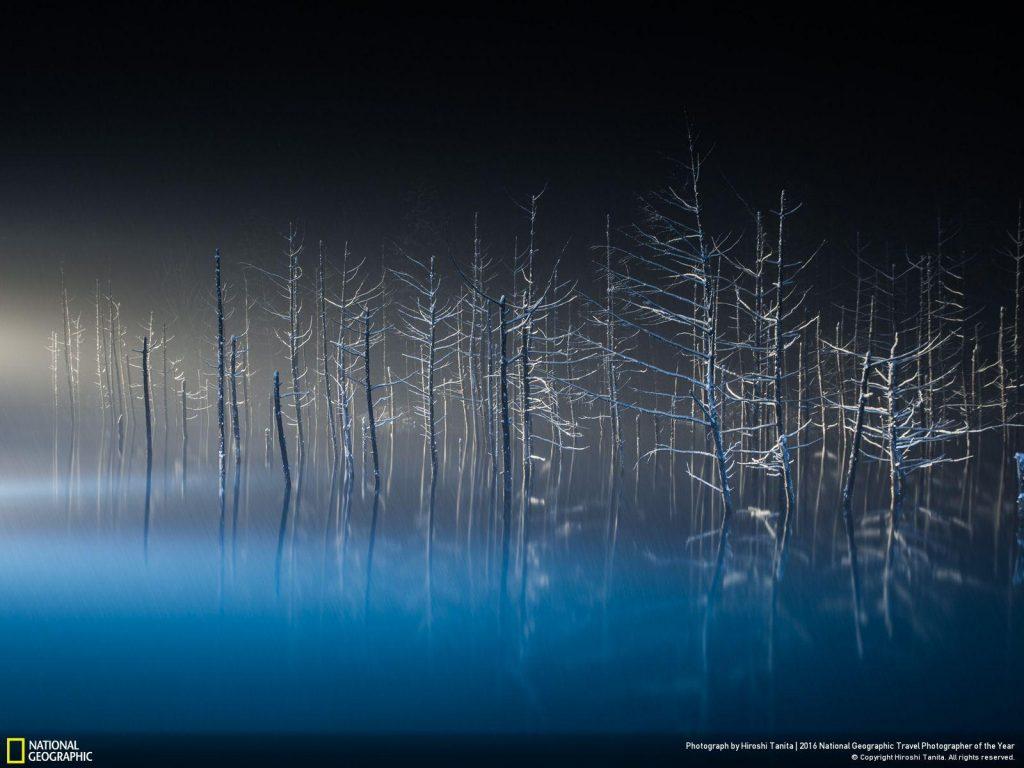 當日本落葉松細細的樹枝曝露於異色光源下,一個個芭蕾舞者就被形塑出來了。 Photograph by Hiroshi Tanita