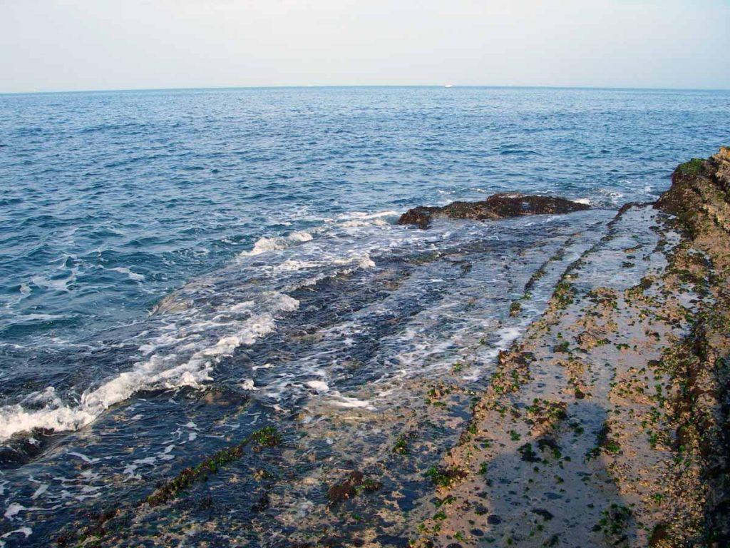 潮間帶是海與陸交界的地方,受潮汐的影響。有別於陸地或海洋的生物,潮間帶物種每天於滿潮時被海水淹沒,於退潮時暴露於空氣中,故潮間帶是一個十分特別之生態系統。