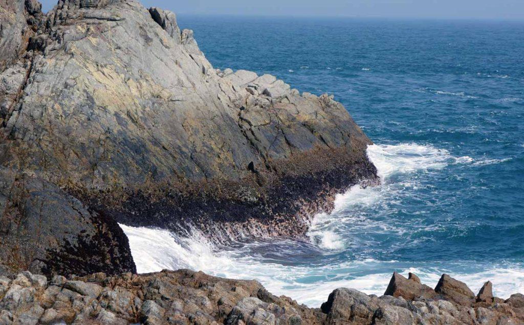 生物在潮間帶並非隨意分佈而是一層一層的,稱為帶狀分佈。