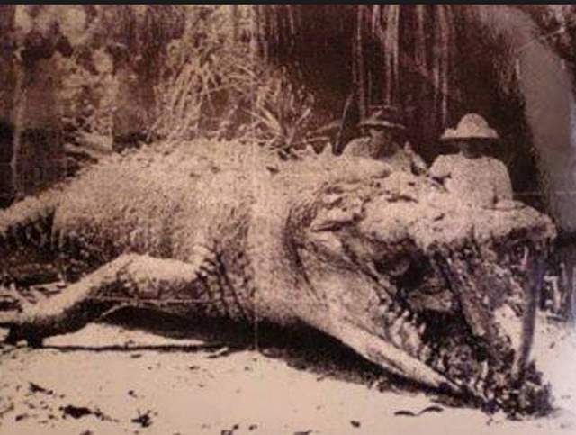 這是Krys僅有的一張照片,這樣的拍攝手法有刻意營造動物視覺上更巨大之嫌。Source: Pinterest