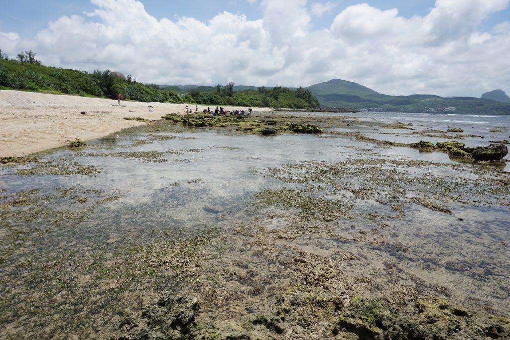 墾丁大光潮間帶泰來海草床