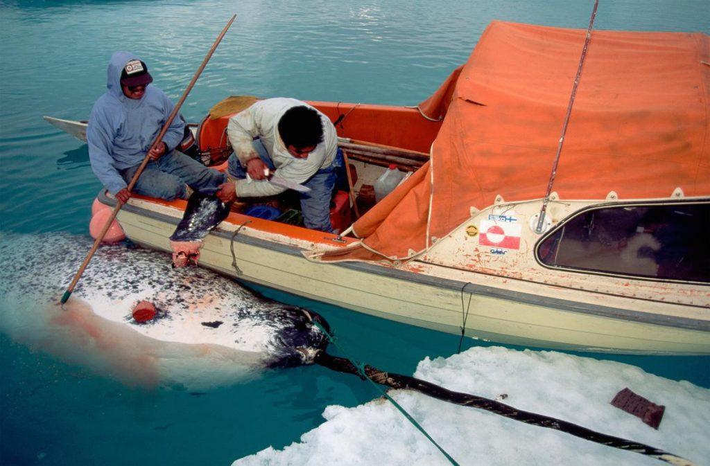 01-whaling.ngsversion.1466091003964.adapt.1190.1