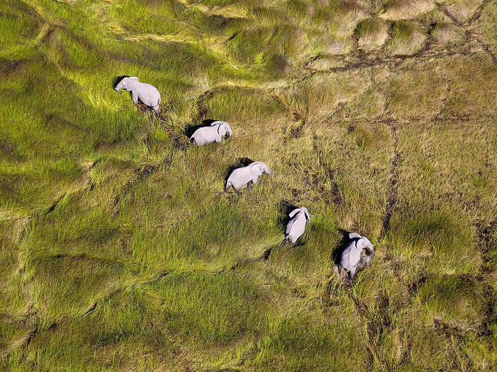 okavango-elephants-aerial_95121_990x742