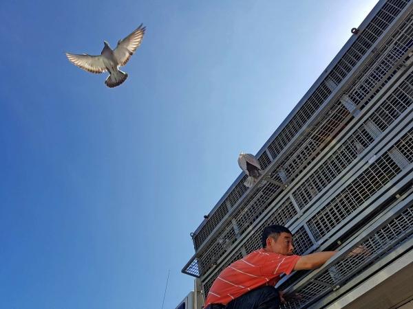 林吟潔-展翅瞬間 備海岸的鴿與人