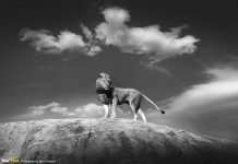 獅子在高處
