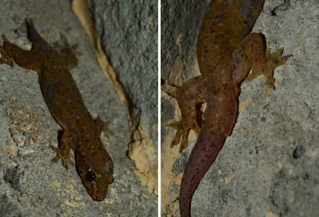 蜥蜴的斷尾求生術- 國家地理雜誌中文網
