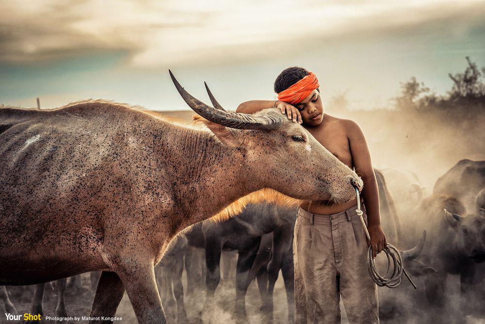 Photograph by Maturot Kongdee