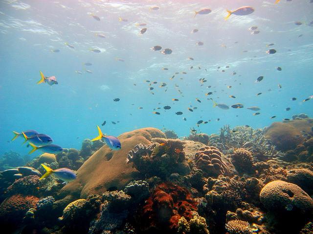 健康的大堡礁,珊瑚礁是許多海洋生物的家,海洋生態系的重要基礎。圖片來源:郭兆揚。