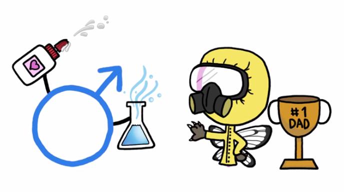 果蠅女生與男生的化學戰有攻有守,共同演化。圖片來源