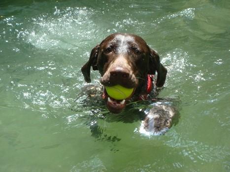 選擇一隻勝任的狗十分關鍵,一隻好的偵測犬必須狂熱地喜愛玩具。