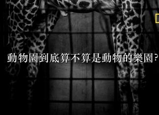 日籍攝影師松井泰憲走遍日本各地動物園,為園內動物拍攝的特寫照片,透過一張張簡單又深沉的黑白肖像,動物似乎也有情感,憤怒、悲傷或無奈,一起來看看松井如何透過影像探究牠們的感受。