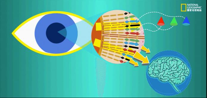 現代醫學的進步,融合基因治療與仿生技術,可望重啟靈魂之窗,讓盲人的世界變成彩色!